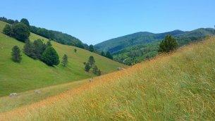 Paesaggio silano (Foto di Mario Greco)