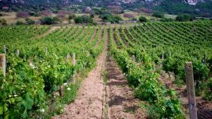 """Calabria-Agricoltura.-Aruzzolo-Ncd-""""Sbloccare-risorse-settore-danneggiato-da-alluvioni"""""""