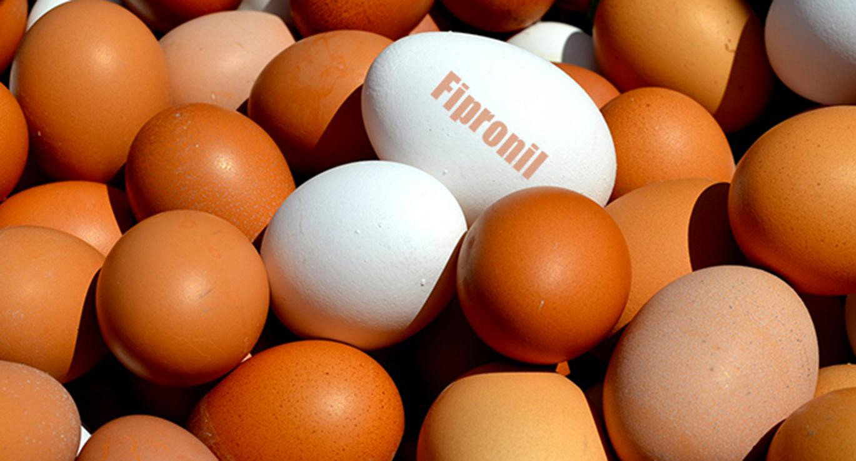 Uova contaminate da Fipronil: ritirati lotti in Sardegna