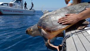 La tartaruga Honolulu