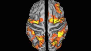 Meccanismi-cerebrali