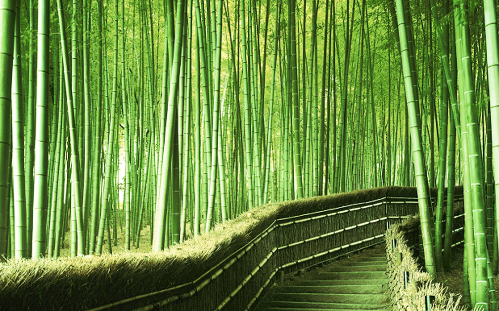 una-piantagione-di-bambu