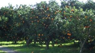 agr-arance-albero