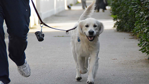 cane in città