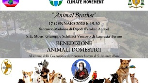 change-destiny-org_animal_brother