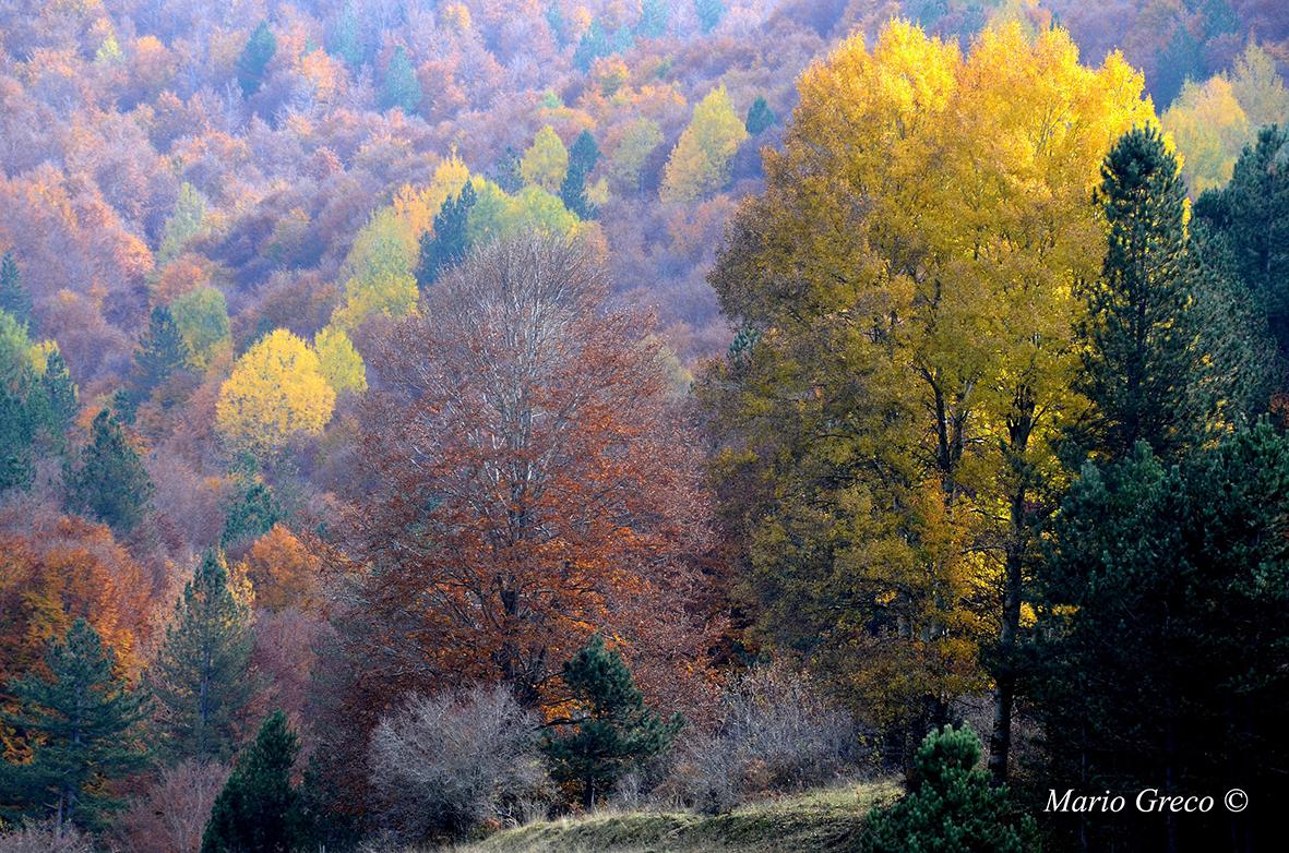 Colori silani (Foto di Mario Greco)