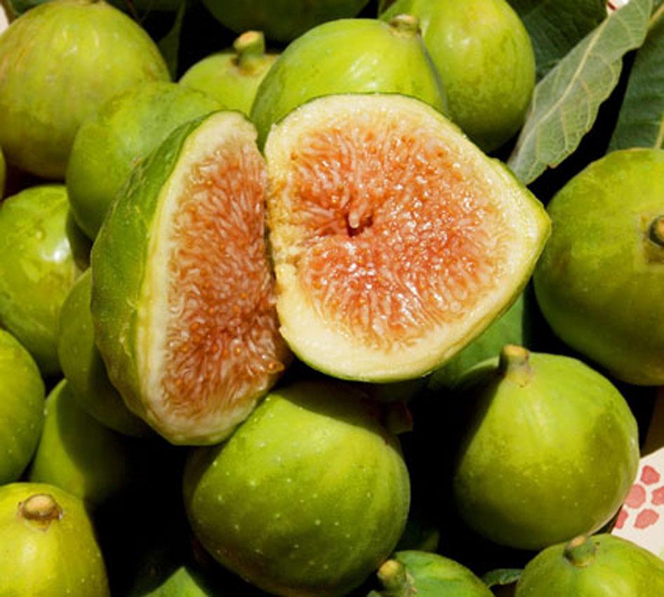 fichi di calabria tante variet per il frutto pi antico