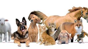 coscienza_animali
