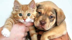 cuccioli_cane-e-gatto