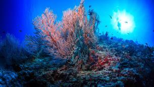 """Esperta: """"Coral restoration una delle grandi sfide per la scienza"""""""