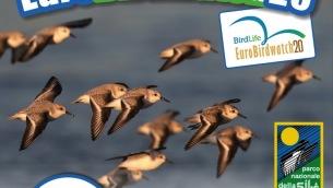 eurobirdwatch_2020_locandina_sila