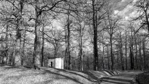 Il bosco di Montepiano ad Accettura (Foto di Paky Cassano)