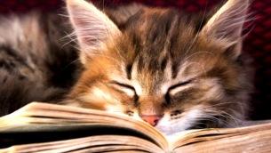 gatti-libri-23