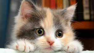 gattino-primo-piano