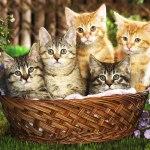 i-gatti-in-un-cestino-fiori-viola-193508