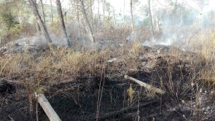 Incendi all'Oasi dell'Angitola (foto Wwf Calabria)