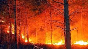 incendi-in-calabria
