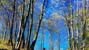mountain-bike-soveria