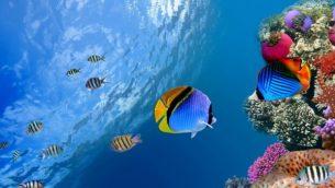oceani-barrieracorallina-riscaldamento-globale-clima-620x430