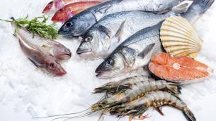 pesce-fresco