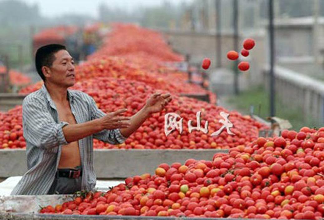 Derivati del pomodoro, c'è l'obbligo di etichettatura