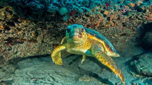 Underwater Photography by Douglas Klug Santa Barbara, CA klugd@cox.net