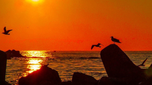 tramontomario