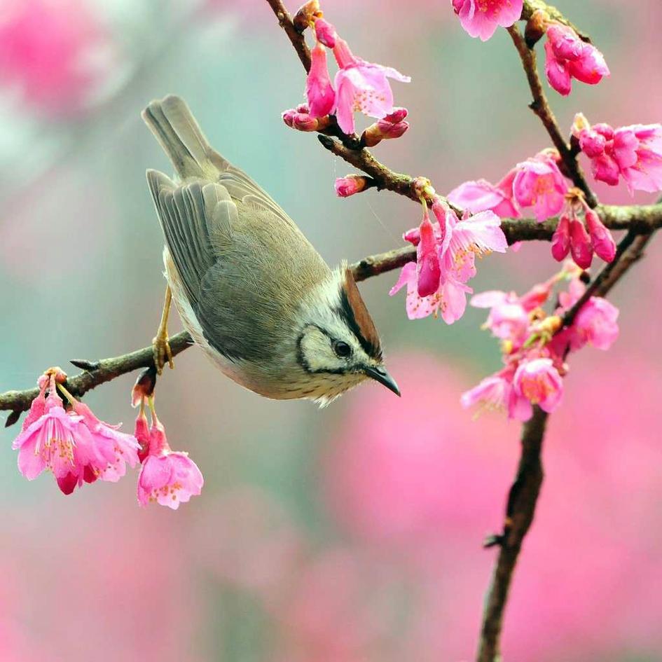 Equinozio di Primavera in 7 tiepide curiosità