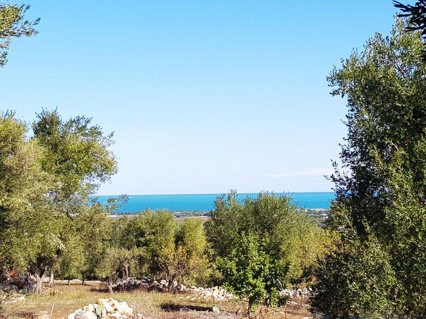 ulivi-mare