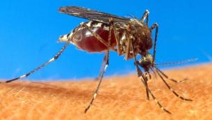 zanzare-tigre-allarme-serio-a-bergamoma-le-altre-citta-lombarde-stanno-peg_a11848fa-26e1-11e5-aa86-398c794b4768_700_455_big_story_linked_ima